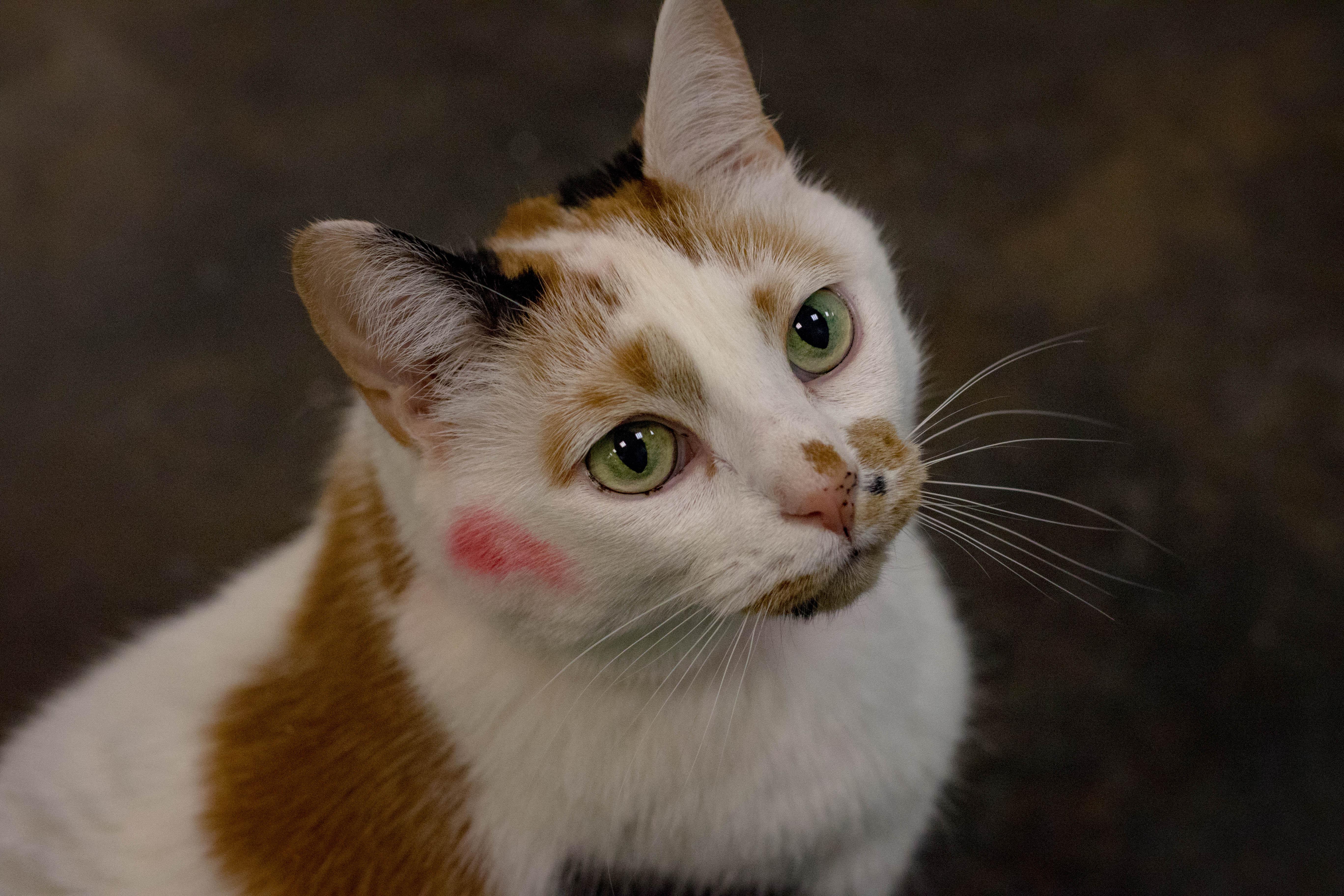 cat hot spots